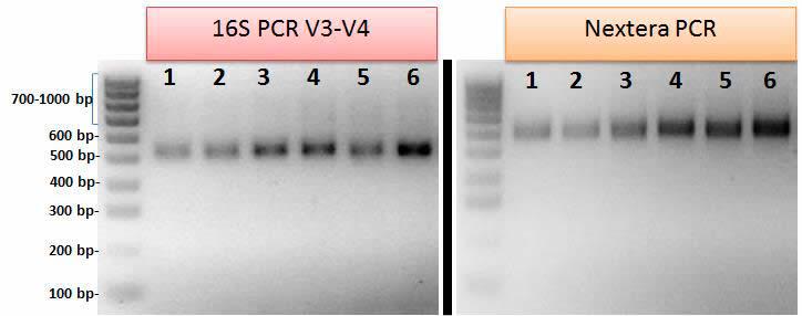 Laboratory Medicine At A Glance Creaci 211 N De Librer 205 As