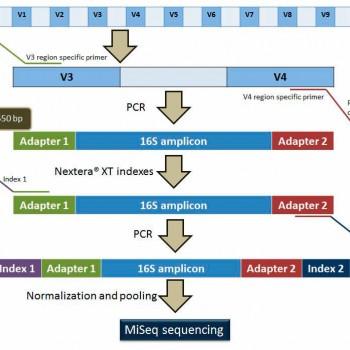 CREACIÓN DE LIBRERÍAS MEDIANTE AMPLIFICACIÓN DEL ARN RIBOSOMAL 16S PARA LA CARACTERIZACIÓN DE LA MICROBIOTA
